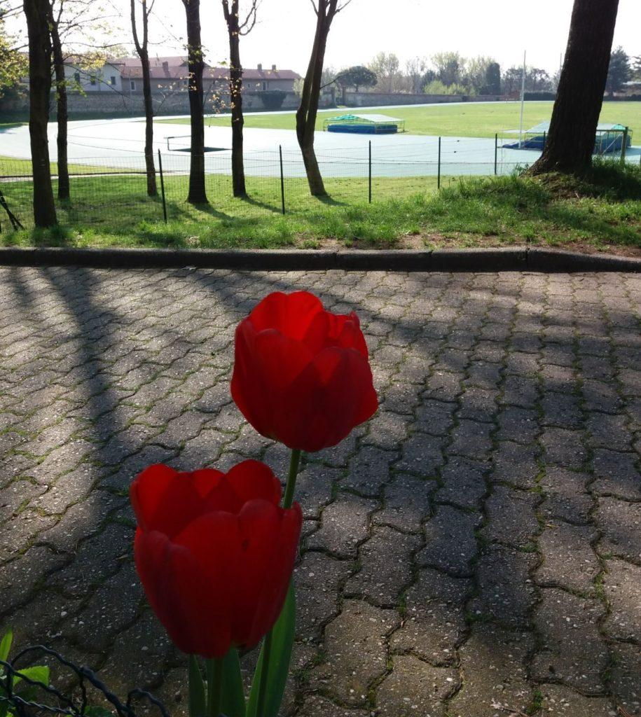 Tulipani in pista a Olgiate Olona: vi aspettano anche loro il 25 aprile!